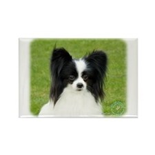 Papillon 9T056D-088 Rectangle Magnet