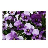 Pansies After a Rain Postcards (Package of 8)