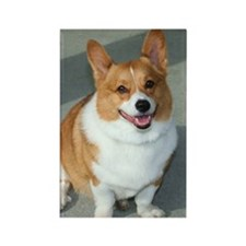 Welsh Corgi Rectangle Magnet (100 pack)