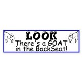 GOATS- In the Back Seat