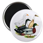 "Duck Quartet 2.25"" Magnet (100 pack)"