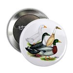 "Duck Quartet 2.25"" Button (10 pack)"