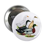 "Duck Quartet 2.25"" Button"