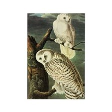 Audubon Fine Art Rectangle Magnet