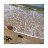 HORSESHOE CRAB Tile Coaster