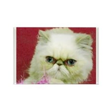 White Persian and Pink Rectangle Magnet (10 pack)