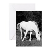 WhiteHorse02 Greeting Cards (Pk of 10)