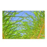 Tropical Fronds Postcards (Pkg of 8)