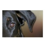 Beauceron Graphic 9 Postcards (Package of 8)
