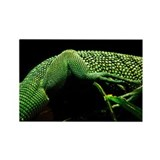 Lizard Skin Rectangle Magnet (10 pack)