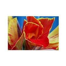 Cana Lillies Rectangle Magnet