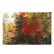 New England Foliage Postcards (Package of 8)