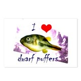 Dwarf puffer Postcards (Package of 8)