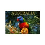 Rainbow Lorikeet Magnet