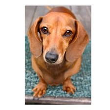 Doxie Postcards (Package of 8)