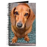 Doxie Journal