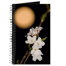 JAPANRELIEF2011 : Cherry Blossoms Journal