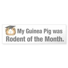Guinea pig rodent of the month Bumper Bumper Sticker