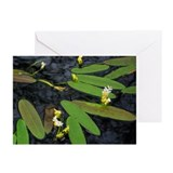 """Waterlilies"" Greeting Cards (Pk of 20)"