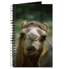 Kissing Camel Journal