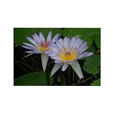 Beautiful Water Lily Rectangle Magnet