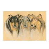 Collie rough Postcards