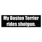 My Boston Terrier rides shotgun (Bumper Sticker)