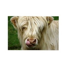 White Highland Cow Magnet