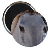 "Walking Horse Eyes 2.25"" Magnet (10 pack)"