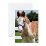 Strawberry Roan Foal Greeting Cards (Pk of 10)