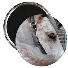 Roan Walking Horse Magnet
