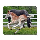 Flying Roan Mousepad