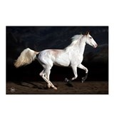 Sabino White Horse Postcards (Package of 8)