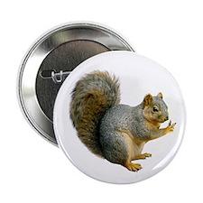 """Peace Squirrel 2.25"""" Button"""