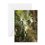Ghost Orchid Greeting Card
