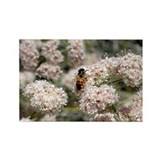 Buckwheat Bee Rectangle Magnet