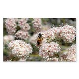 Buckwheat Bee Decal