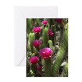Pink Torch Cactus Greeting Card