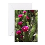 Pink Torch Cactus Greeting Cards (Pk of 20)