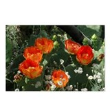 Orange Prickly Pear Postcards (Package of 8)