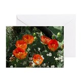 Orange Prickly Pear Greeting Cards (Pk of 20)