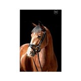 Bay Mare Rectangle Magnet (100 pack)