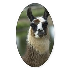 Brown and White Llama Decal
