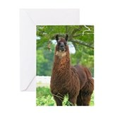 Black Llama Greeting Card