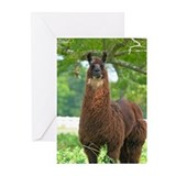Black Llama Greeting Cards (Pk of 20)