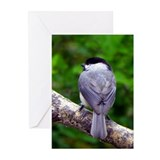 Chickadee Feathers Greeting Cards (Pk of 20)
