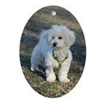 Coton De Tulear Ornament (Oval)