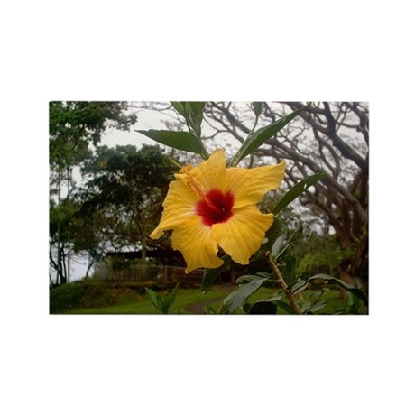 Yellow Hibiscus Rectangle Magnet