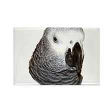 Congo African Grey Rectangle Magnet