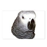 Congo African Grey Postcards (Package of 8)